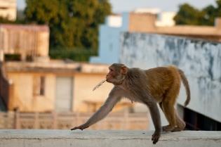 Copy of monkeyunframe
